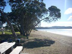 Bike beach pohutukawa